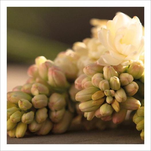 Nước Hoa Nữ Gucci Bloom Eau De Parfum